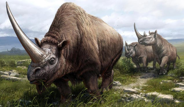 Ancient History of Rhinos, Including Woolly Ancestors, Revealed in DNA Study