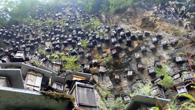 Illustration for article titled Chinese Beekeepers Actually Have a Good Reason for Hanging Hundreds of Beehives Off a Cliff