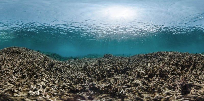 Image via XL Catlin Seaview Survey