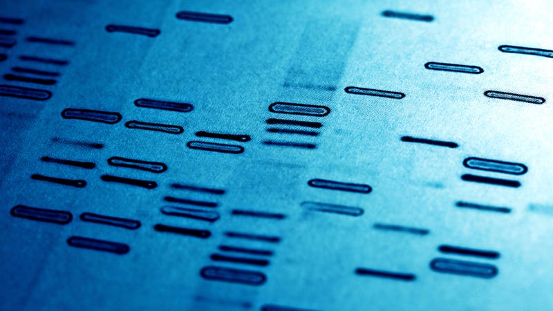 Illustration for article titled Engineers Have Invented a  Programming Language to Build DNA