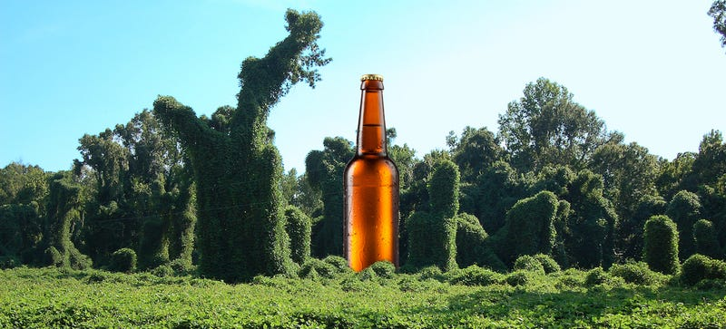 Illustration for article titled Would You Drink A Beer Made From Kudzu?
