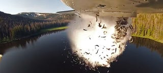 Illustration for article titled Holy Carp! Watch These Planes Bomb Lakes With Live Fish