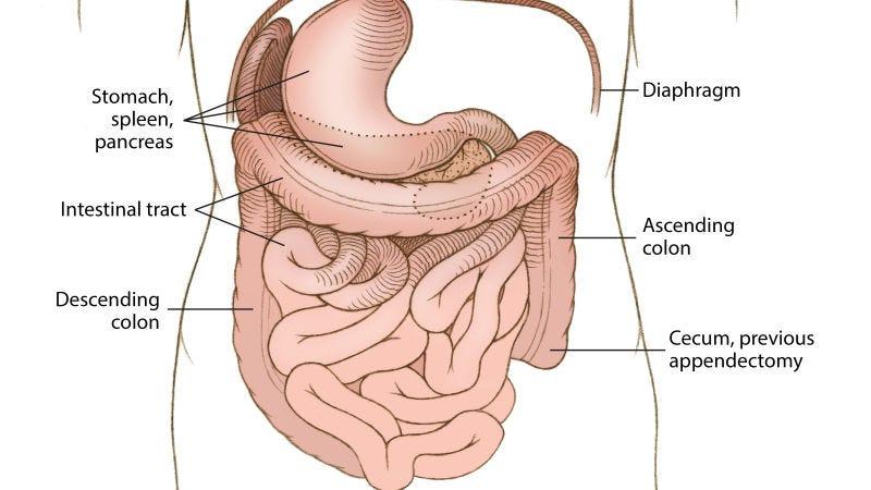 Illustration for article titled Una mujer de 99 años vivió y murió sin saber que la mayoría de sus órganos estaban en el lugar equivocado