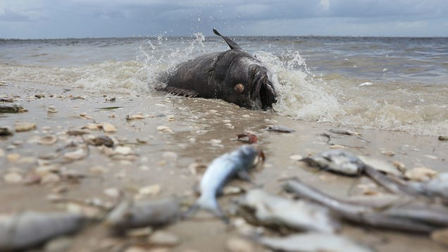 What Is a Red Tide?