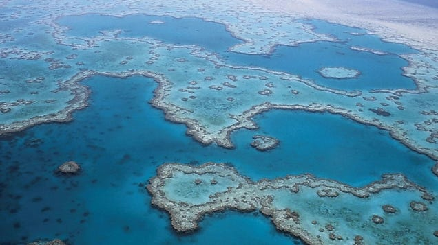 The Great Barrier Reef Has a Surprisingly Morbid History