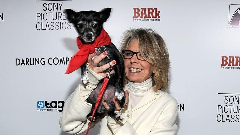 Illustration for article titled Diane Keaton Hoists an Adorable and Adoptable Dog Up For Your Inspection