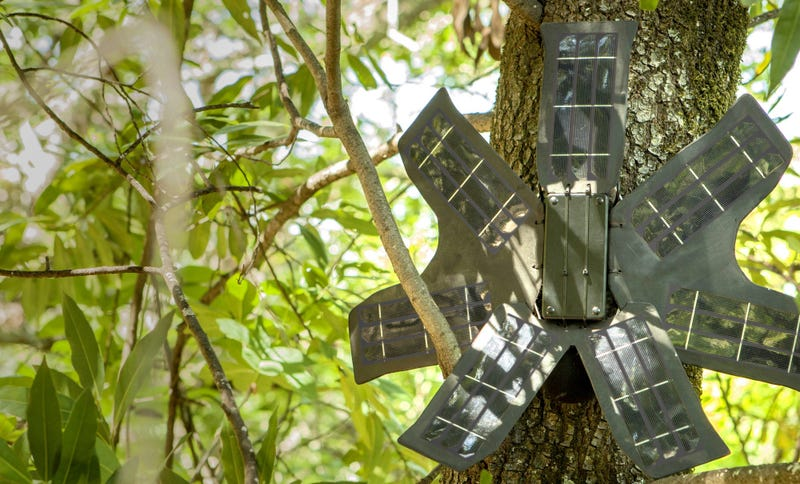 Topher White's cell phone listening device attached to a tree. Source: Rainforest Connection