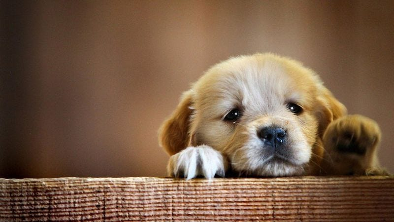 Photo: Emergency Puppy