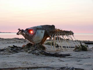 Illustration for article titled Incredible photograph of the sunrise glowing through a dead fish's eye