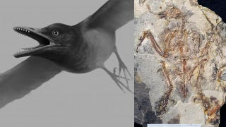 Illustration for article titled This dinosaur-era bird had a full set of teeth for crushing armored prey