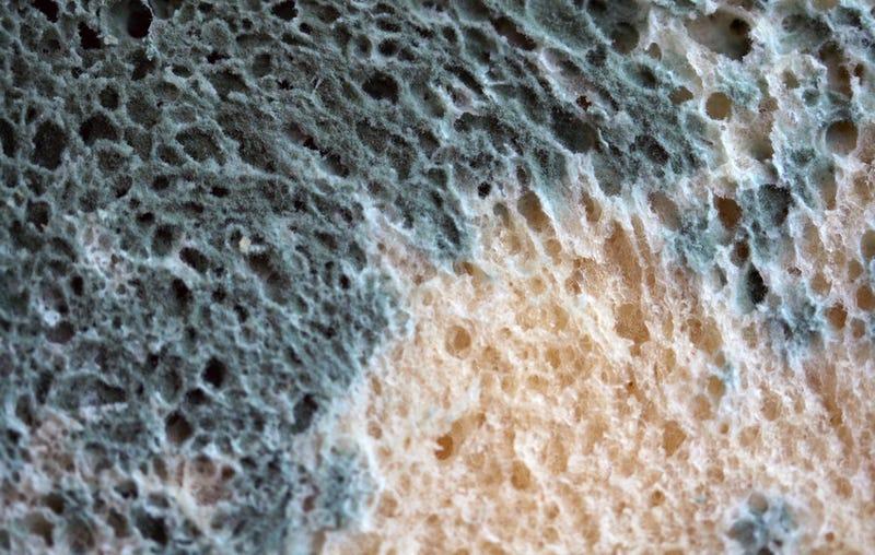 Illustration for article titled Has comido un pedazo de pan que tenía moho ¿y ahora qué?