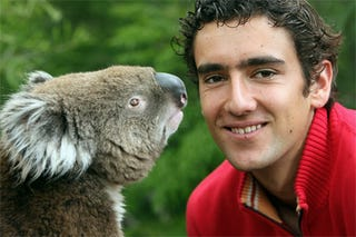 Illustration for article titled Croatian Racketeers, Koala Bears Always Make It Better