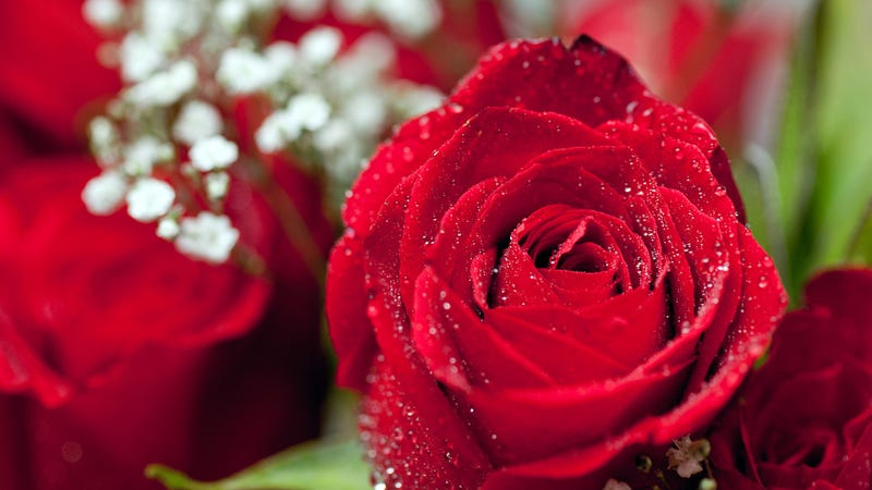 how to pick the right flowers for valentine's day and avoid, Beautiful flower