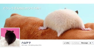 Illustration for article titled A Facebook Page Dedicated Entirely to Hamster Butts