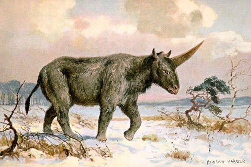 Illustration for article titled Este es el animal que probablemente dio origen al mito del unicornio
