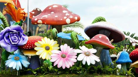 Scientists Finally Unlock the Recipe For Magic Mushrooms