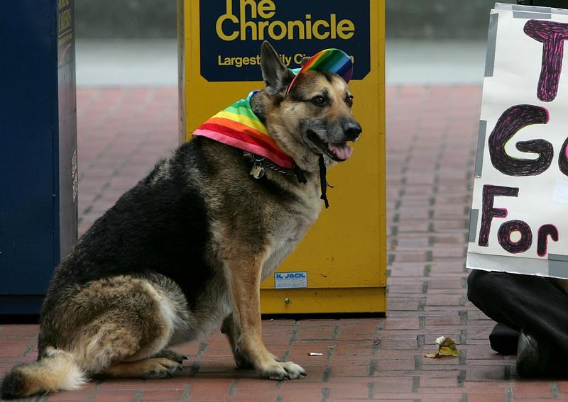 Gay dog enjoys San Francisco's Pride Parade in 2006.