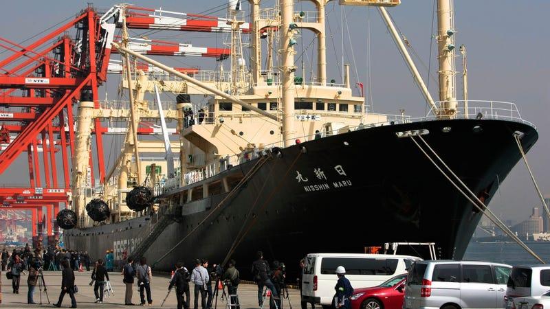 Japan's Nisshin Maru whaling ship docked at a Tokyo pier. Image: AP Photo/Itsuo Inouye