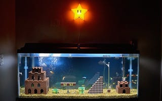 Illustration for article titled Watch A Super Mario Bros. Aquarium Get Built From Scratch