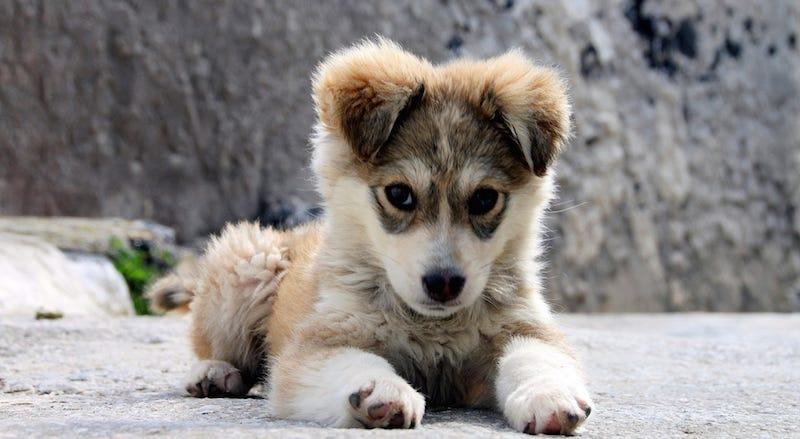 Un estudio confirma lo que ya sabíamos: los perros intentan decirnos algo con sus expresiones faciales