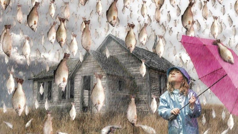 Resultado de imagem para A chuva de animais existe mesmo.E há uma explicação científica