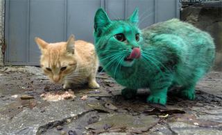 Illustration for article titled Zöld macska grasszál Bulgáriában!