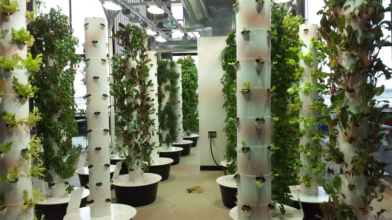 14 High Tech Farms Where Veggies Grow Indoors
