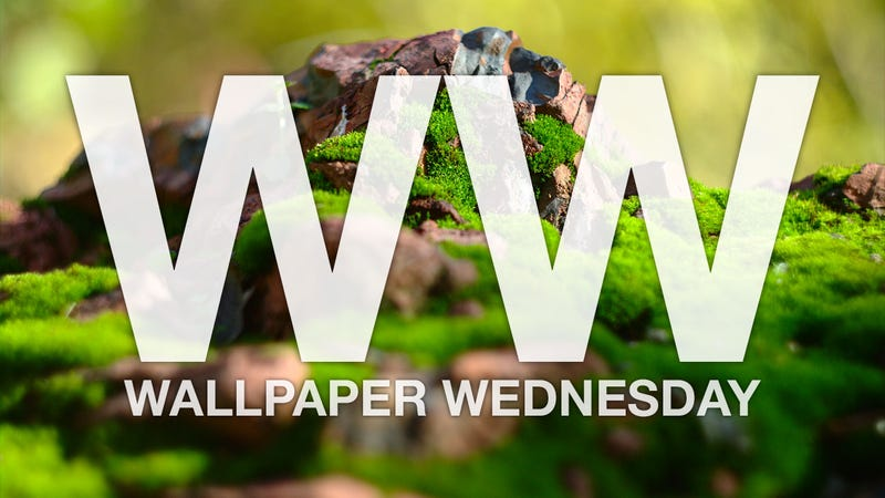 Get Extra Close with These Macro Photo Wallpapers
