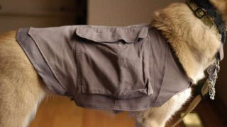 Illustration for article titled Hack an Old Pair of Cargo Pants Into a Dog Cooling Vest