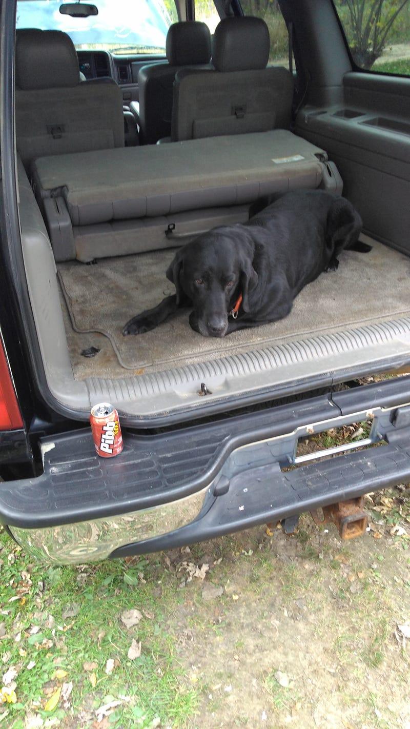 Doggo tested!
