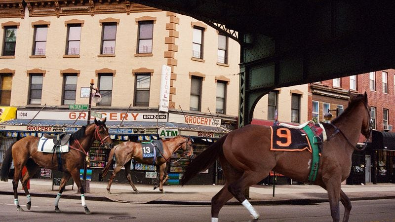 Illustration for article titled New Horse-Racing Initiative Aimed At Training Thoroughbreds From Inner City