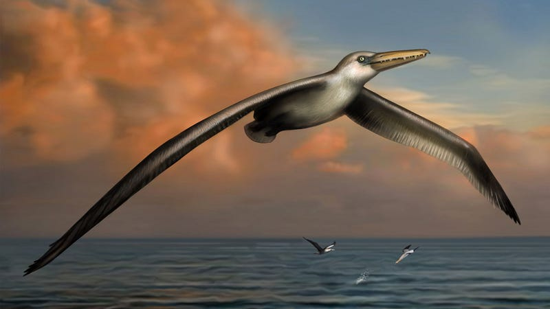 Illustration for article titled Behold The Largest Bird To Have Ever Flown