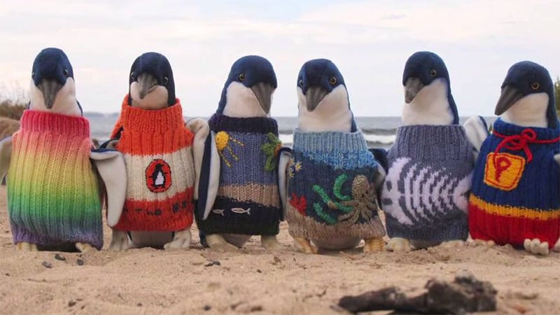 Illustration for article titled 109-Year-Old Man Spends His Time Knitting Sweaters for Tiny Penguins