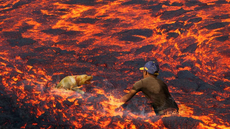 Illustration for article titled Inspiring Rescue: This Good Samaritan In Hawaii Waded Through Lava To Rescue A Dog From Drowning
