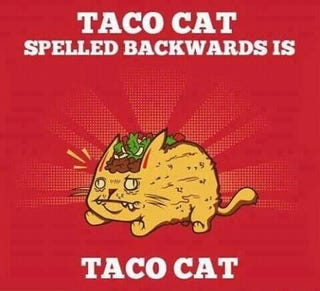 Illustration for article titled Taco Cat
