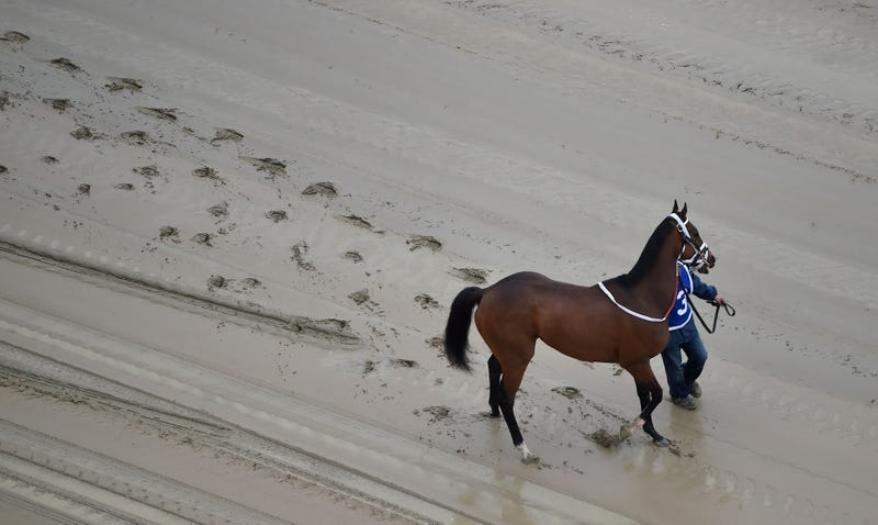 Homeboykris walks down the muddy track before Saturday's first race of the day at Pimlico. Via AP.