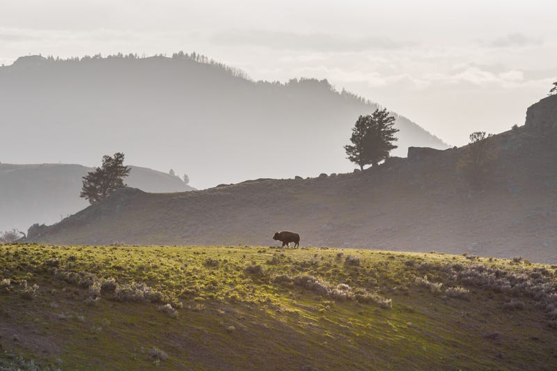 Image: Yellowstone National Park