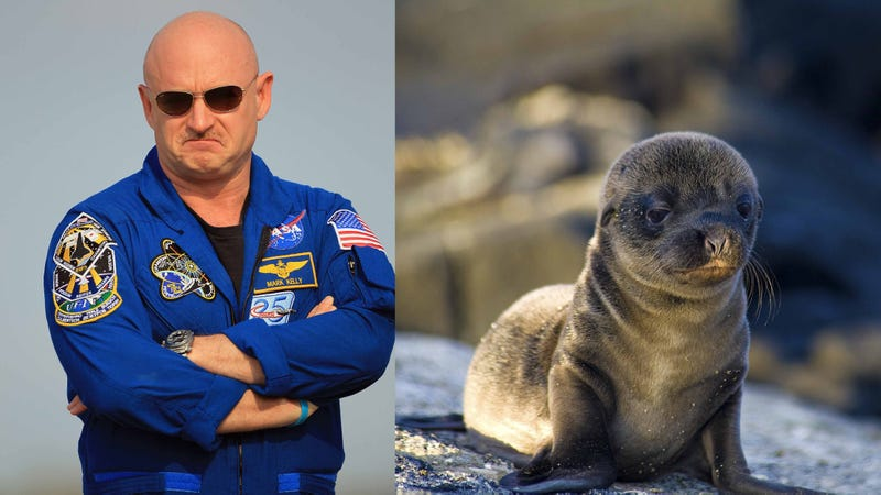 Illustration for article titled Gabby Giffords' Husband Rescues Baby Sea Lion, Is the Cory Booker of the West