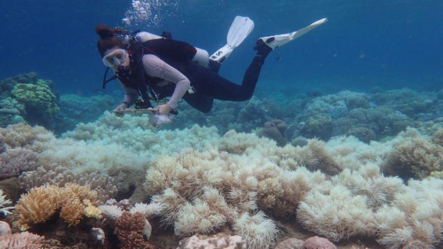 Two Thirds of the Great Barrier Reef Is Now Officially Bleached