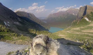 Illustration for article titled This Timelapse Was Derailed By An Inquisitive Marmot