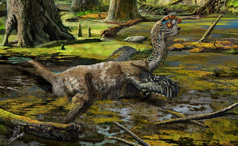 New fossilized species of winged dinosaur unearthed in China