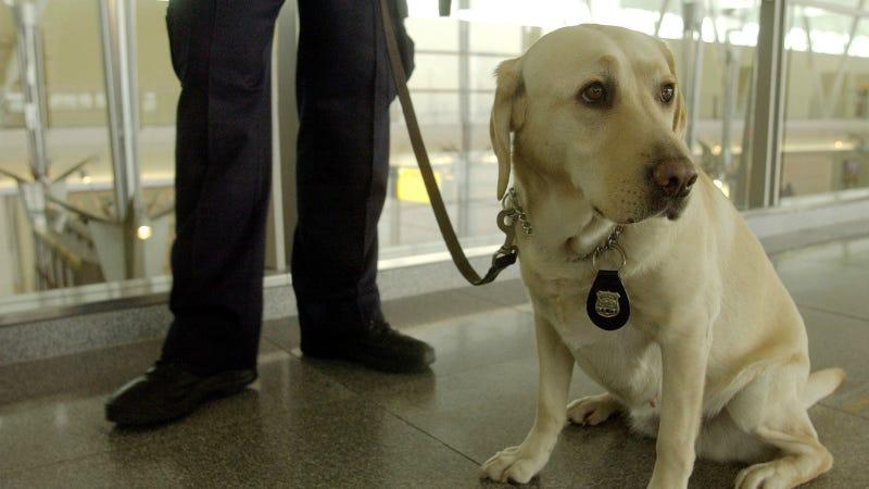 Airport doggo via Getty Images.