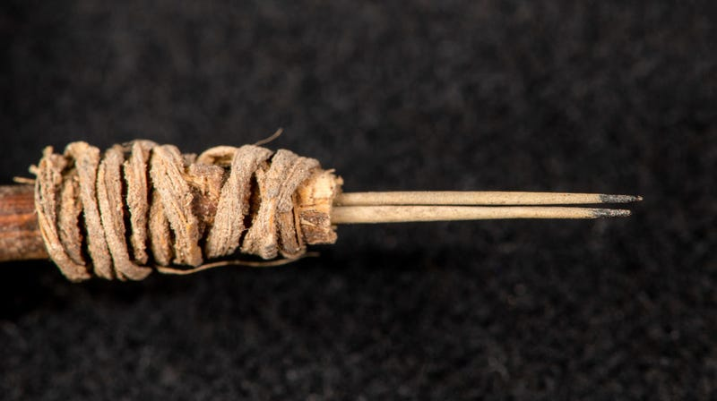 The 2,000‑year‑old cactus spine tattoo tool.