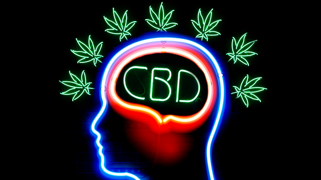 Should You, Your Mom, and Your Dog Be Using CBD?