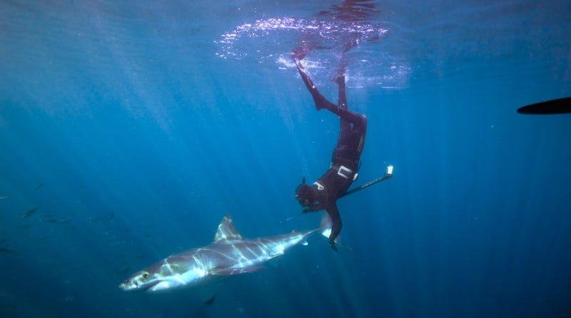 Illustration for article titled Este hombre es capaz de hacerse un selfie con tiburones blancos y no perder ni un dedo en el intento