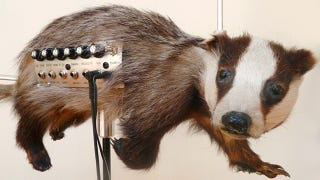 Illustration for article titled Creepy Taxidermied Animals Now Make Creepy Music Too