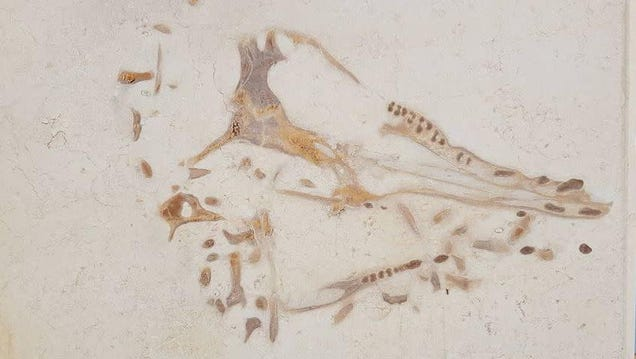 How I Discovered a 40-Million-Year-Old Whale in Kitchen Limestone