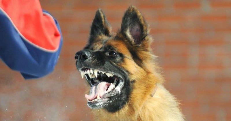 Illustration for article titled Una naturópata trata el mal comportamiento de un niño de cuatro años con una dosis de saliva de perro rabioso