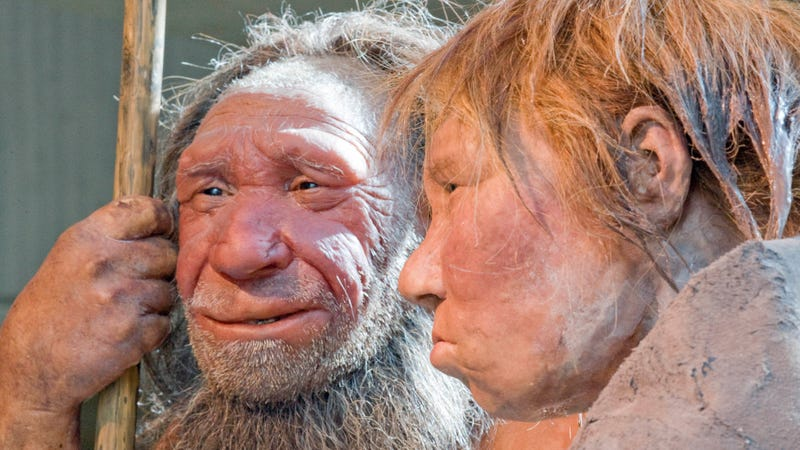 Illustration for article titled NeanderthalExperts Wish You Wouldn't Insult Neanderthals By Comparing Them to Politicians