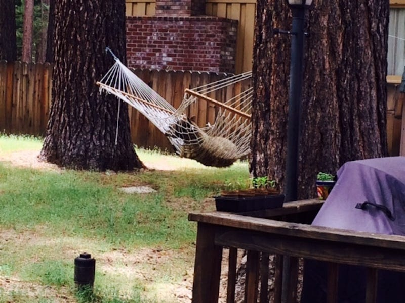 Illustration for article titled EXCLUSIVE BEAR PICTURES: Bear In A Hammock, Bear By A Trash Can